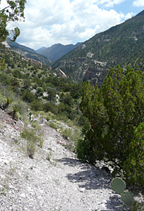 catwalk trail new mexico